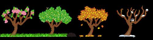 Four seasons Earth Day activity