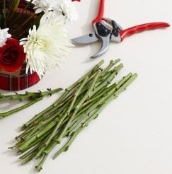 thanksgiving-thorns